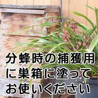 ニホンミツバチミツロウ(日本蜜蜂,蜜蝋)ブロック2個(100g)ニホンミツバチの捕獲などに★プロが使うミツロウ★【あす楽対応】