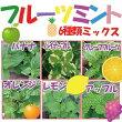 【当店農場生産】フルーツミント6種類セット6鉢セットのお買い得セット♪