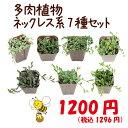 【当店農場生産】多肉植物 ネックレス系7種セット