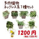 【当店農場生産】多肉植物 ネックレス系7種セット...