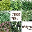 【当店農場生産】タイム7種類7鉢セット☆繁殖力旺盛なタイム♪グランドカバーに!