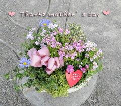 母の日☆GF2147フレーズセゾンボウルS(白)の寄せ植え(送料無料)