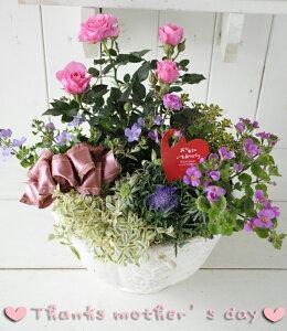 母の日☆GF1039ローゼリーボウルS(ホワイト)バラ苗入り寄せ植え(送料無料)