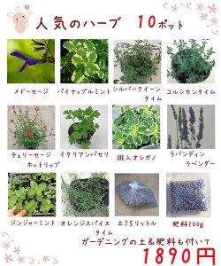 送料無料!【当店農場生産】人気のハーブ10鉢+ガーデニングの土15L+肥料のお試しセット☆