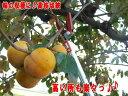 ■日本製■伸縮高枝切鋏#1830 かるのび 3M【MB-KP】【KB】