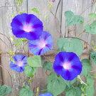 江戸風情単色薄紫5個セット