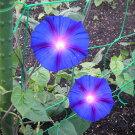 江戸風情単色青紫5個セット