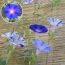 江戸風情5個・江戸風情単色青紫5個セット