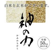 【送料無料】北村広紀の自然米「神の力」1kg紙袋【九州佐賀産】【産地直送】プレミア米こめコメギフト