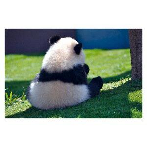 ● 見返って欲しいパンダ! 絵はがき・ポストカード 【メール便OK】