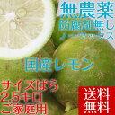 ポイント5倍【送料無料】 【愛媛県大三島産】無...