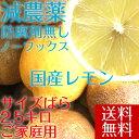 【愛媛県大三島産】送料無料 国産レモン【サイズばら2.5キロ...