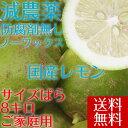 ポイント5倍【愛媛県大三島産】送料無料 国産グ...