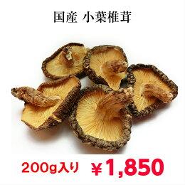国産薄葉椎茸