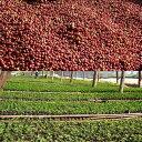 ◆無農薬・有機栽培原料100%コーヒー・ウガンダ  400g(約40杯分)【メール便送料無料】人と環境に優しいコーヒー【HLS_DU】 安心・安全・焼きたて煎りたて美味しいコーヒー豆 3