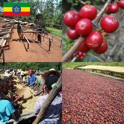 【初回購入限定】エチオピア・モカコーヒー無農薬・有機栽培原料100%2つの農園コーヒーお試し味比べセットイルガチェフ、シダモ・シャキッソ各100g合計200g無農薬コーヒーコーヒー豆メール便送料無料【HLS_DU】焼きたて煎りたてコーヒー