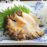 高級食材「天然もの!津軽海峡産蝦夷あわび」1個120グラム前後のサイズです。津軽海峡の恵が凝縮されてます♪