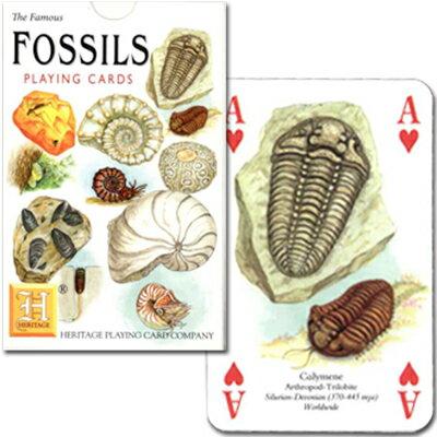 【大昔の地球を想像してみよう】トランプ 化石