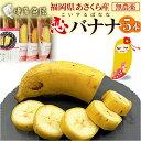 国産 バナナ 恋バナナ 5本 無農薬 福岡県産 果物 朝倉産 産地直送 恋するバナナ