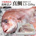 今だけポイント5倍 期間限定1620円OFF 鯛 刺身 フィレ 冷蔵 2kg~1.5kg 九州 鮮魚...