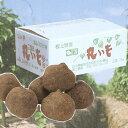 ※予約受付※ 「加賀丸いも 3kg」加賀平野の豊かな土と水に育まれたねばねば山芋 ※季節商品※