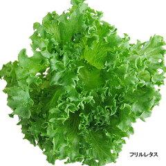 無農薬新鮮野菜:スマイルリーフ スピカ。洗わずにそのまま食べられる採れたて新鮮無農薬野菜...