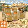 マヌカハニー 貴重な生タイプ【MG200+】酵素が生きている天然マヌカ蜂蜜[ワイルドハニー] 1,020g(340g×3本) 【送料無料】