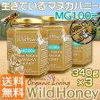 マヌカハニー 貴重な生タイプ【MG100+】酵素が生きている天然マヌカ蜂蜜[ワイルドハニー]340g×3本set【送料無料】