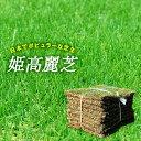 【普通便】芝生 天然芝 姫高麗芝 2平米 宮崎県産