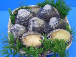 岩手県三陸産活あわび2個 活ほっき貝5個 三陸貝セット