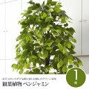 観葉植物 フェイクグリーン ベンジャミン 160cm 光触媒加工 空気...