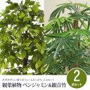 観葉植物 2点セット フェイクグリーン ベンジャミン&観音竹...