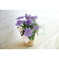 母の日ギフト 2016年 プレゼント 人気 ランキング 早割 花束 基本送料無料 花ギフトメッ…