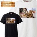 猫 ネコ ねこ cat キャット ペット 野良猫 ぬこ ketty キティ ニャンコ にゃんこ動物 animal 可愛い cute キュート pretty プリティー 写真 フォト フォトT Tシャツ プリント デザイン 洋服