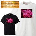 レゲエ 星条旗 大麻 マリファナ ガンジャ weed ウィード 草 カンナビス 420 ジョイント Tシャツ T-shirt ティーシャツ 半袖 大きいサイズあり big size ビックサイズ