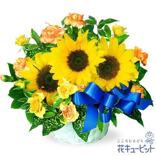 花キューピット【父の日】ひまわりのリボンアレンジメントmh00-511038 プレゼント ギフト お祝い 母の日 記念日...