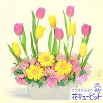 チューリップのガーデンアレンジメント花キューピット