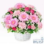 【3月の誕生花(ピンクガーベラ等)】ピンクガーベラのアレンジメント