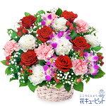 【お祝い】赤バラとデンファレのアレンジメント