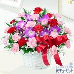 お母さんありがとう!アレンジメント花キューピット