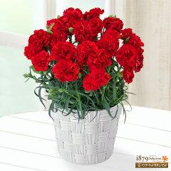 花キューピット【母の日産直ギフト】mt04017-poda01幸せの赤カーネーション【オリジナ…