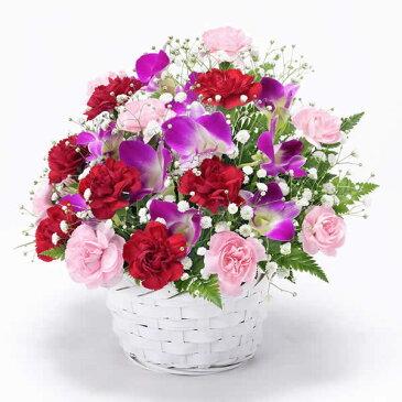 花キューピット【母の日 ギフト】スイートmt01yr-521282 女性 お母さん ママ 母 祖母 誕生日 プレゼント カーネーション