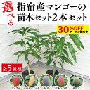 ★クーポン利用で30%OFF★【鹿児島県指宿産 5種類から選