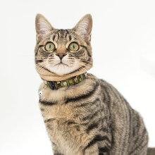 【猫】【首輪】MIX2.4kgのかくたろうくんはグリーンを着用