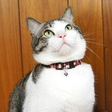 【猫】【首輪】MIX4.8kgのまろくんはレッドを着用