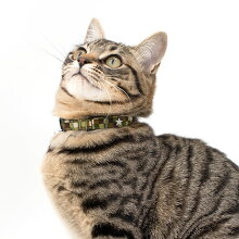 【猫】【首輪】3つのスターリベット付きです