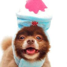 【汚れ防止】【犬】【服】ポメ4.3kgの獅子丸くんはMを着用