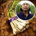 年間旬味!島らっきょうは食べだしたら止まらない。お箸が全く止まりませんよ~~と。沖縄県産 ...