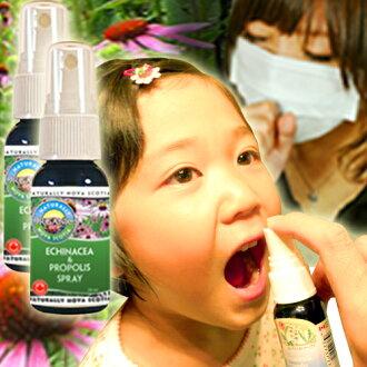 It is / kids /Propolis////fs3gm/ichi for two Nova Scotia & propolis spray sets regular article /Echinacea//// existence machine / herb / organic farming / organic / えきなせあ / エキナシア / child