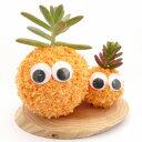 【人気商品】癒し系 苔玉 モスビー君(オレンジ) ダブル[苔玉 ガーデニング雑貨] 【HLS_DU】10P03Sep16